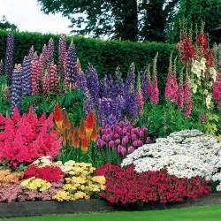 perennials garden pinterest perennials gardens and perennial gardens