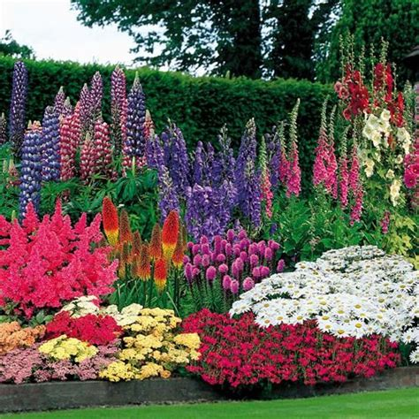 perennials garden pinterest gardens beautiful and