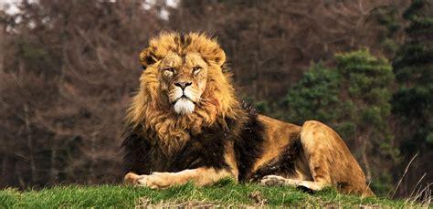 discount vouchers doncaster wildlife park lion country animals yorkshire wildlife park
