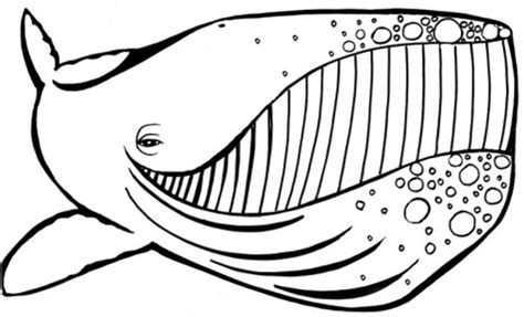 coloring page humpback whale 316 best images about animal coloring pages on pinterest