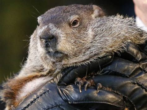 groundhog day quotes that step groundhog day will punxsutawney phil see his shadow