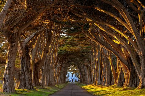 amazing tree 19 magical tree tunnels you should definitely take a walk through bored panda