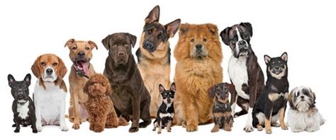 choosing the best dog breed for your family and children choosing the best dog breed for family our dogs and us