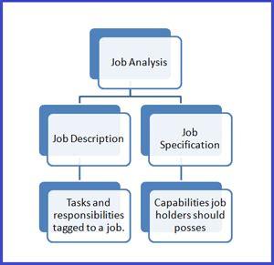 job terminology human resource management