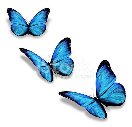 Gamis Buterfly Premium White Pasmina three blue butterflies isolated on white stock photos freeimages