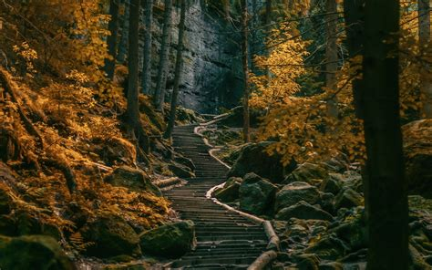 Landscape Wall Murals Wallpaper path stairs dark forest germany nature landscape