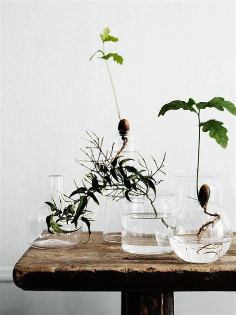 indoor water garden plants 15 diy indoor water garden ideas home design and interior