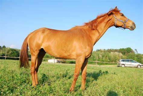 agriturismo con in cavallo in fattoria didattica puledro della fattoria stallone