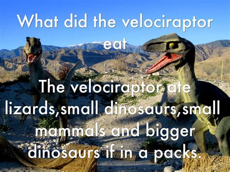 what does velociraptor eat it velociraptor by jacwil5644