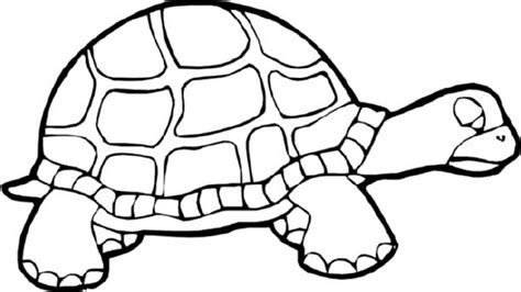 turtles coloring turtles coloring page coloring home