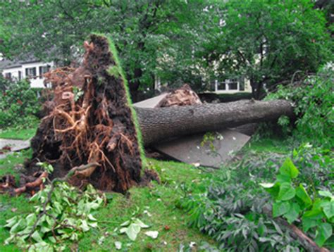 home insurance and fallen trees aw insurance tree removal coverage edwardsville il