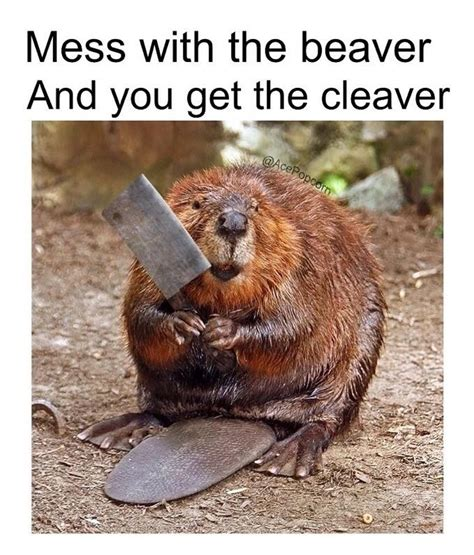 Beaver Meme - mess with the beaver dank meme dream team pinterest