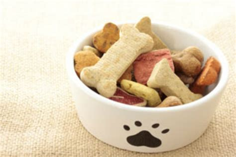puppy treats healthy and treats to make