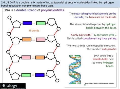 relationship dna six skills to strengthen relationship bonds books bioknowledgy 2 6 structure of dna and rna