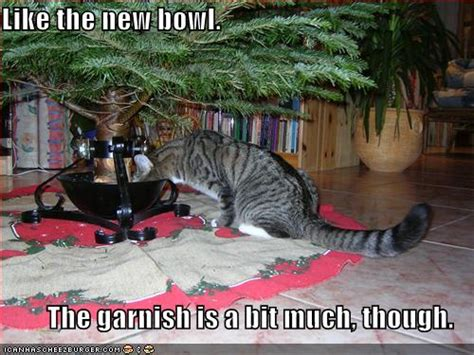 funny cats in christmas trees lolcats page 4 the ebay community