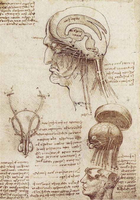 leonardo da vinci the 3836562979 codex leicester pdf google search anatomy codex leicester anatomy and searching