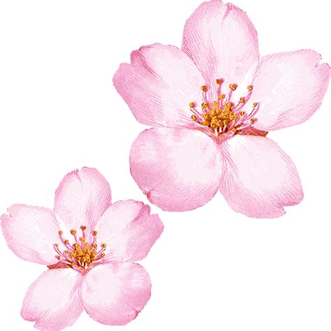cherry blossom clip cherry blossom clip 080210 187 vector clip free