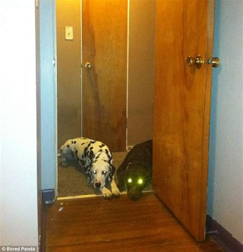 dog not allowed in bedroom dogs find ways around humans rules with hilarious results