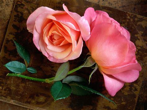 imagenes a rosas rosas animadas imagui