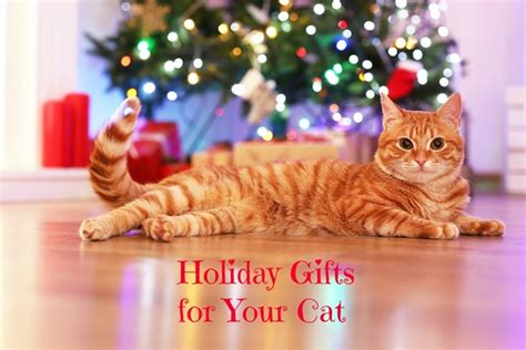 fun christmas gifts for cats don t forget your feline friend