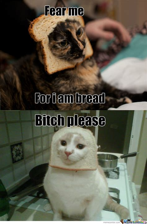 Bread Cat Meme - bread cat by noaxav meme center
