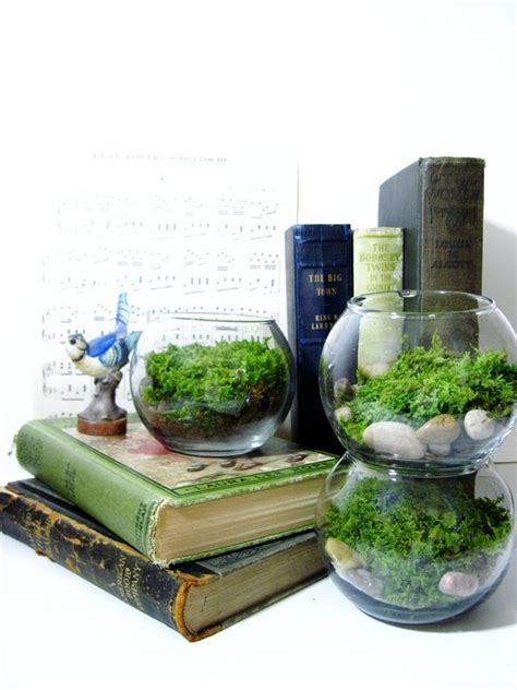 Office Desk Plant Live Plant Office Terrarium Mini Indoor Desk Garden Glass Bowl Live Moss Easy Starter
