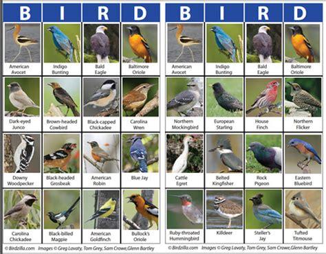 Backyard Identification by Bird Identification