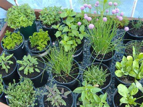 herb garden growing herbs gardeners supply fresh planted herbs gastronomy pinterest