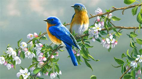 wallpaper with birds funny image collection images for colourful birds wallpaper