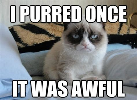 Best Of Grumpy Cat Meme - purred once grumpy cat meme