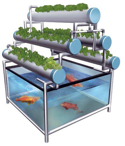 membuat hidroponik rumahan cara menanam aquaponik nft sederhana urbanina