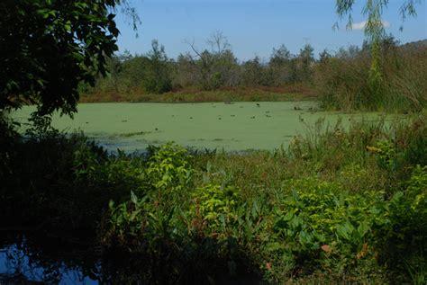 la conejera bogota humedal la conejera secretaria distrital de ambiente