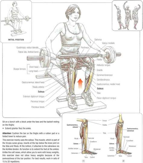 seated barbell press seated barbell calf raises abdominal muscles fitness vip