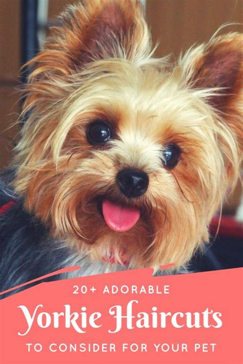 haircuts for yorkie dogs females 184 best dog grooming images on pinterest doggies dog