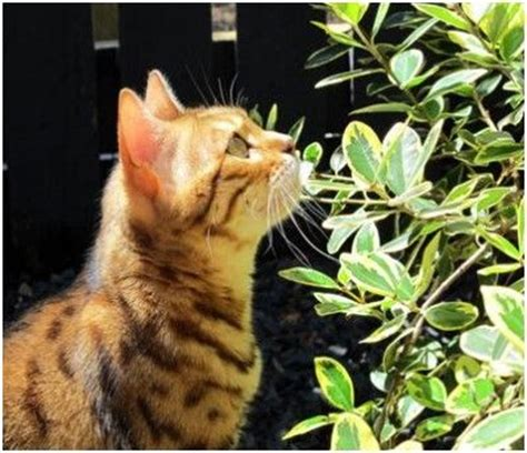 how to get rid of cats in backyard how to get rid of cats in the garden on a mission to