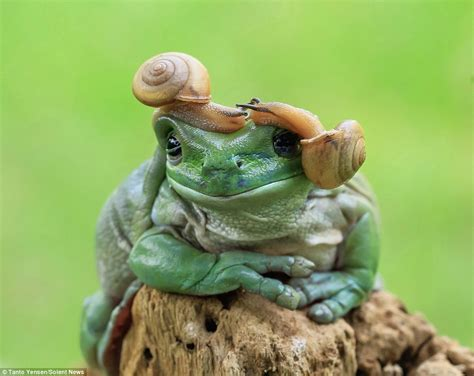 what does tanto tanto yensen photographs moment snails give frog a