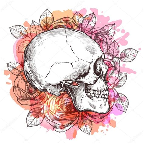 Skull And Flower watercolor skull and flowers stock vector