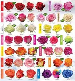rose varieties fetish flora pinterest