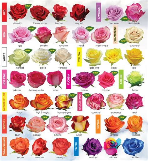 How To Make Different Types Of Flowers With Paper - 30 diagrams to make you master in growing roses
