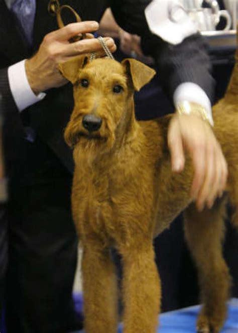 fire house dog cast irish dogs houston chronicle