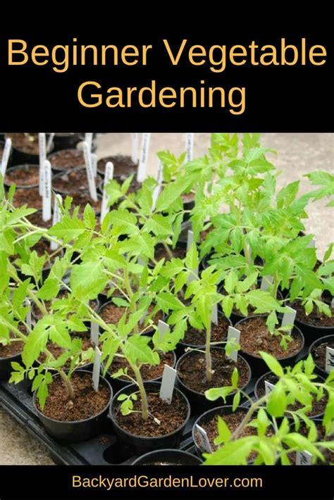 vegetable garden for beginners beginner vegetable garden backyard garden lover