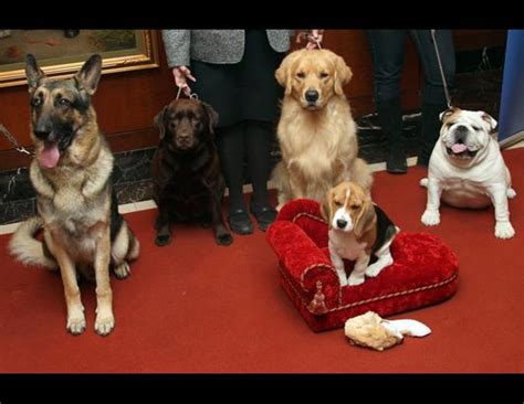 American Kennel Club Dog Breeds by American Kennel Club S Most Popular Dogs Breeds Picture