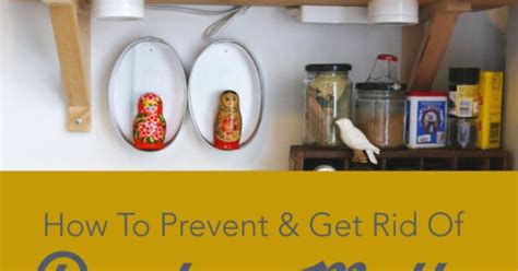 how to prevent get rid of pantry moths will have dry