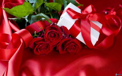 descargar rosas retratos para descargar imagenes de rosas muy hermosas