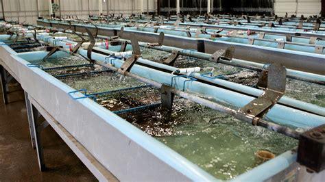 catfish hatchery layout world congress on ecological sustainability farming nemo
