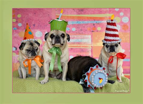 pug puppy birthday birthday card pug birthday card 5x7 by grettasgirls