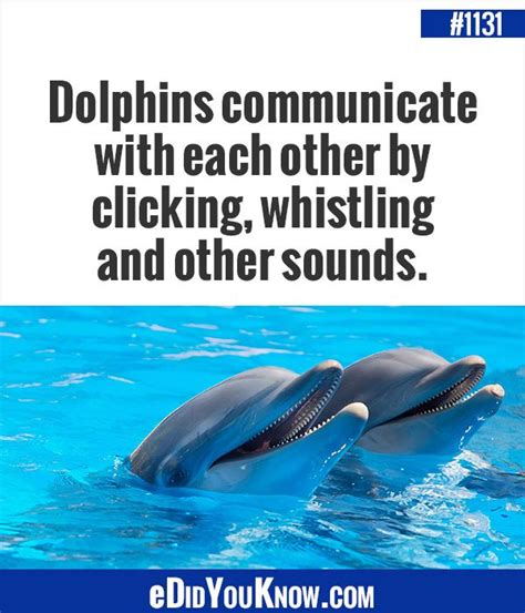 dolphin talk how we can talk with dolphins in 5 easy steps age books edidyouknow dolphins communicate with each other by