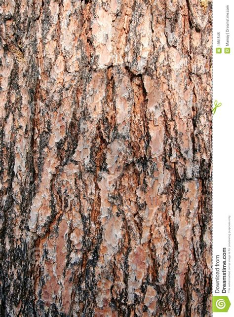 texture pine tree bark stock photo image  surface