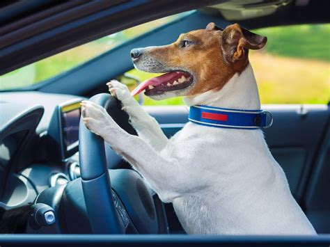 best cars for dogs top performing seat belts crates and carriers autobytel