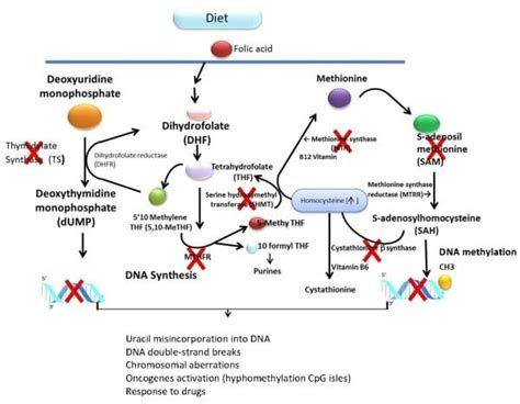 Methylation Detox Symptoms by What S The Big Deal About Methylation